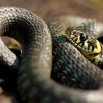 Swiss scientists struggle to find people who are scared of snakes