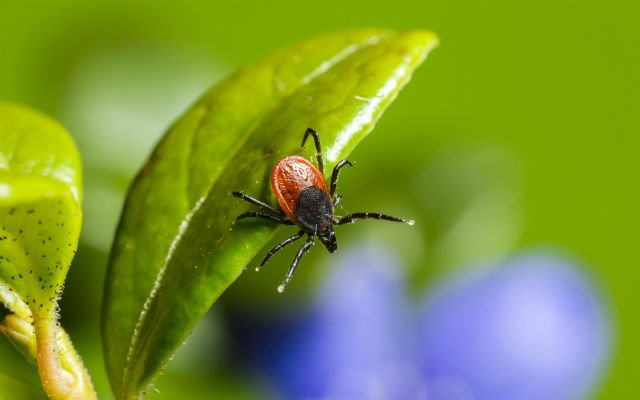 Swiss government extends vaccination area for tick-borne encephalitis as cases increase