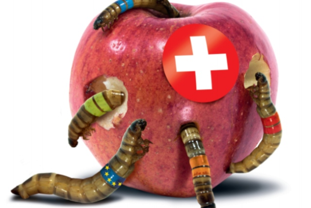 Inside Swiss politics: Why everyone is talking about this 'worm poster'