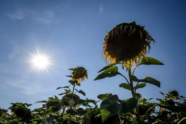 Swiss summer of 2019 was 'third hottest on record'