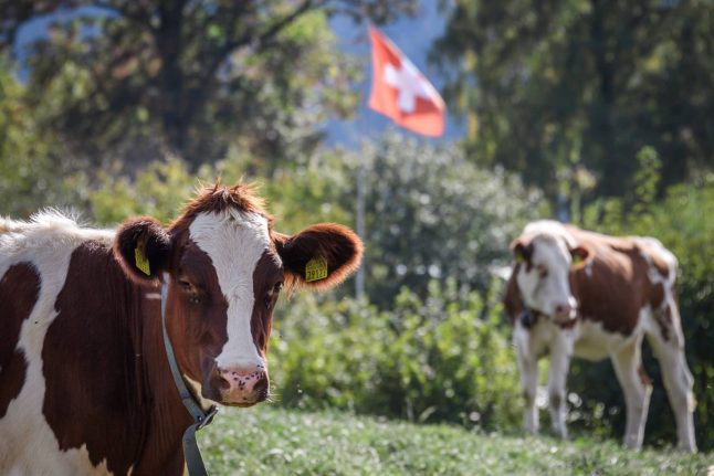 CHF4000 for littering? New fines proposed to save Swiss cows