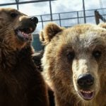 How an Italian man's lack of zoo animal knowledge cost him Swiss citizenship