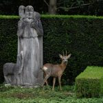 EXPLAINED: Why a plan to shoot deer at this Basel City cemetery is causing a storm