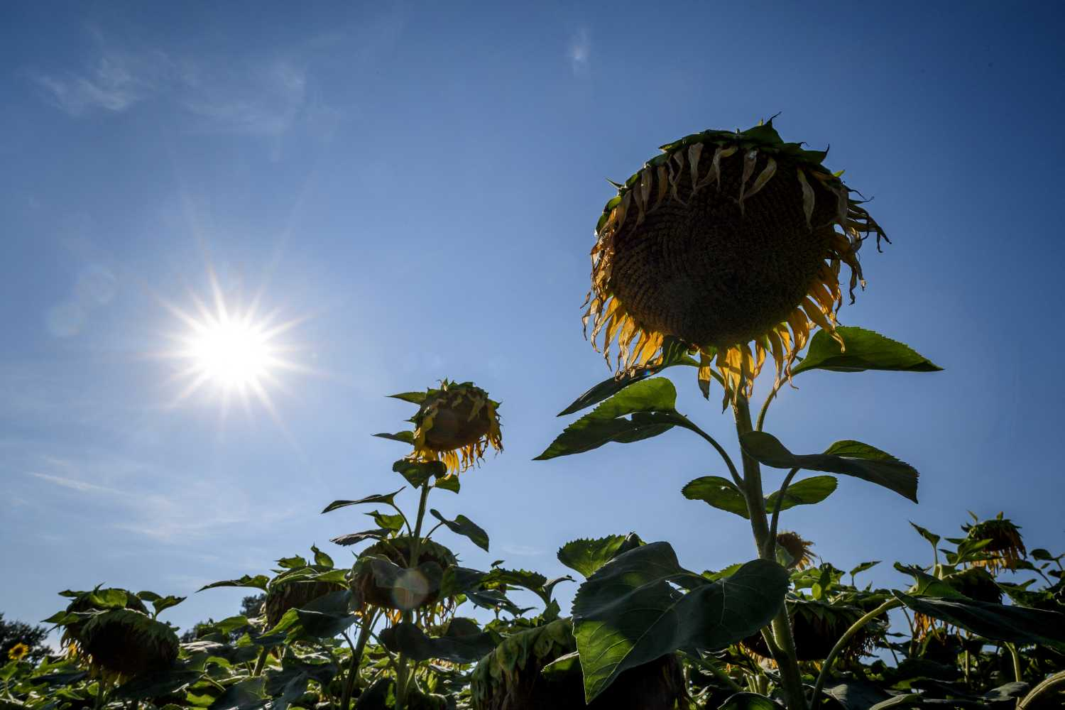 18 degrees and sunshine: Warm weather predicted for Switzerland this weekend